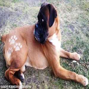 dog-tattoos-2