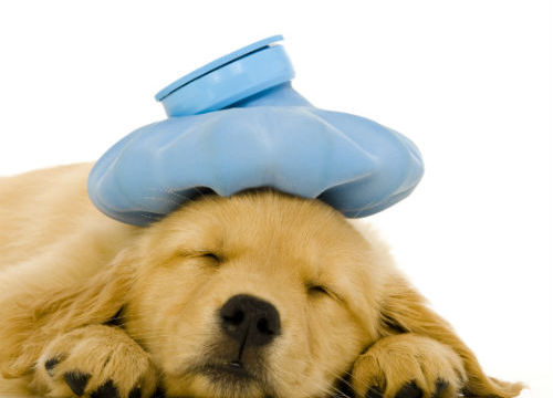 cute-puppy-sick-vet